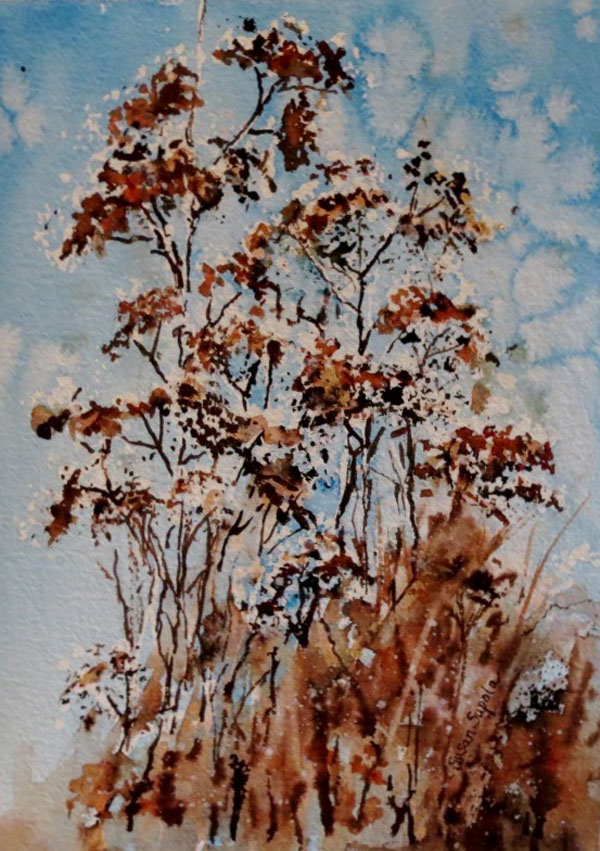 Susan Supola - Weeds in Winter