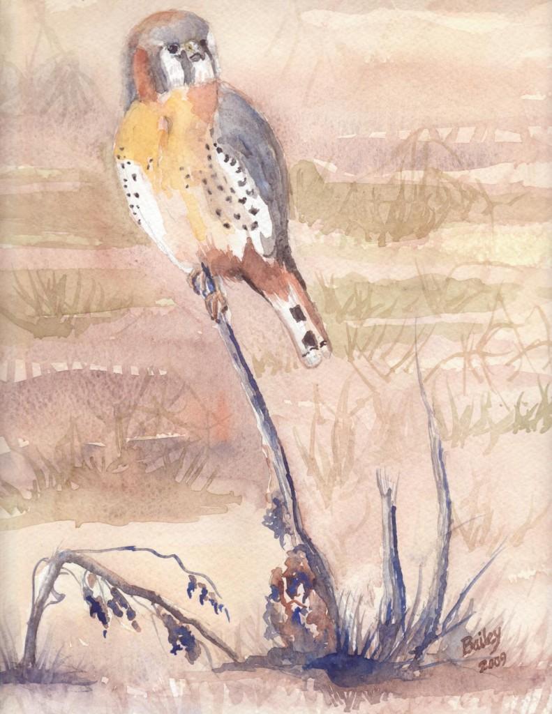 Falcon at Ridgefield