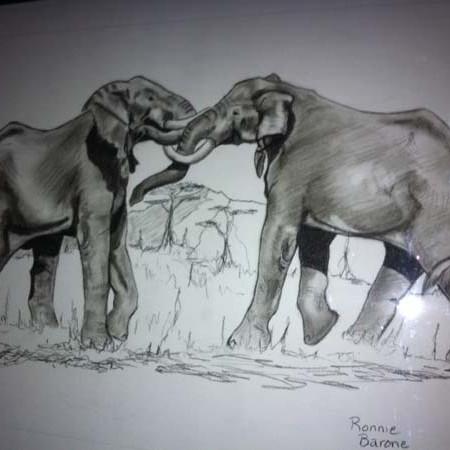 Elephants battling