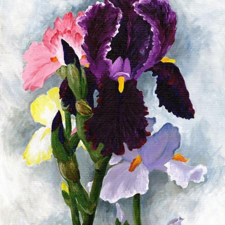 3 pink-violet irises
