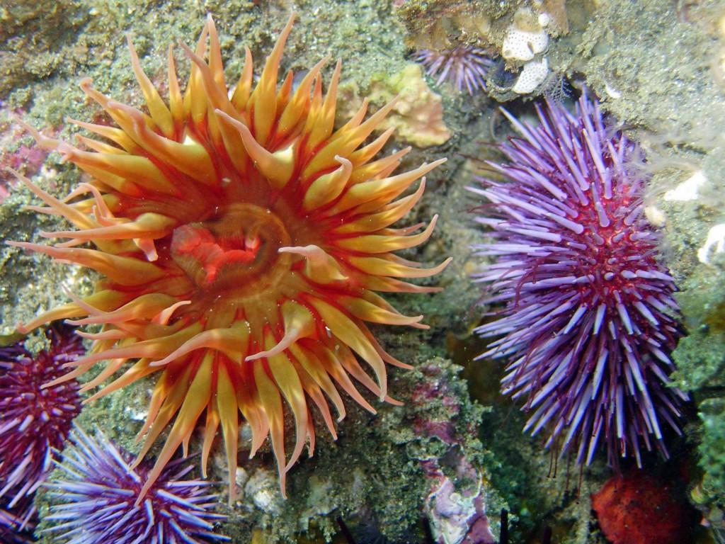 underwater photo of sea urchins