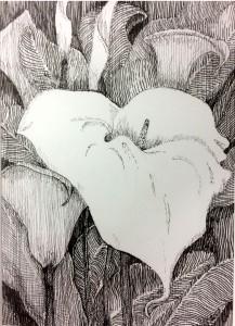 garden of Calla Lilies