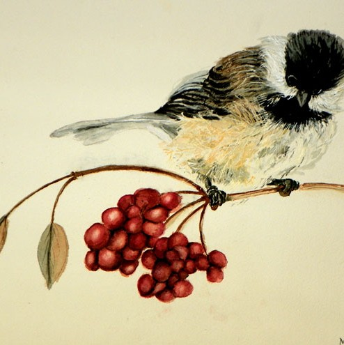 chickadee on a branch with red berries