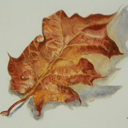 detailed color painting of a maple leaf