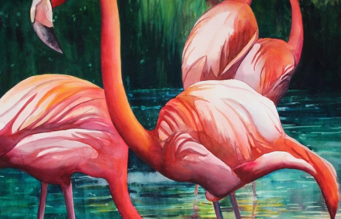 5 flamingos in different positions