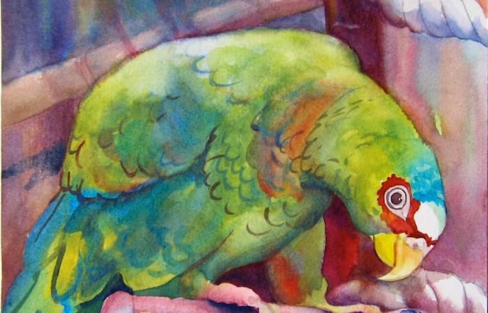 parrot in habitat