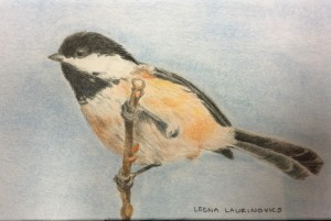 chickadee bird on a branch