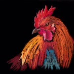 Colorful 3/4 view of rooster
