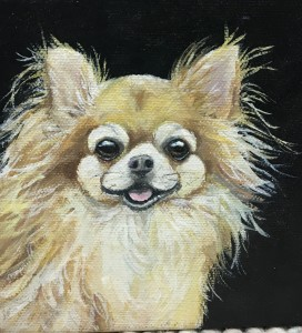 small dog portrait