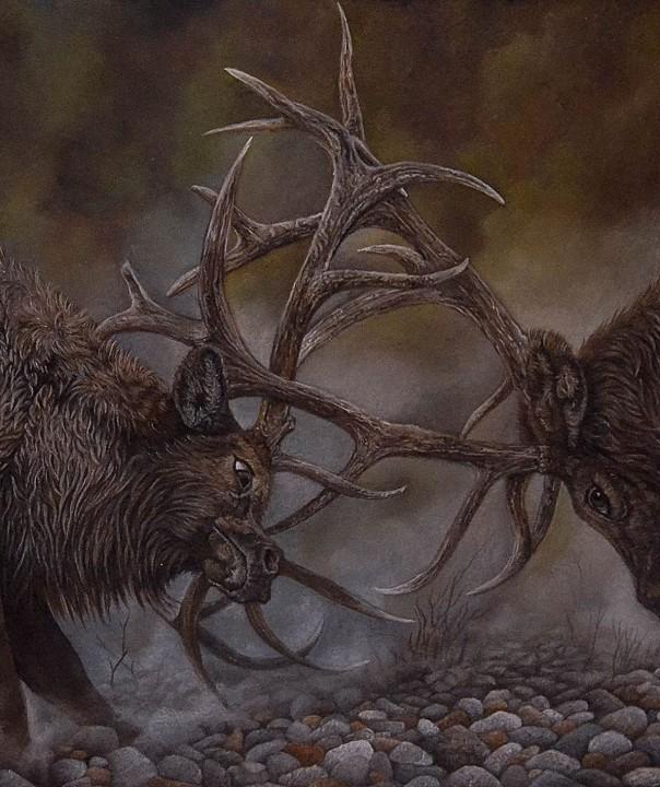 two deer fighting