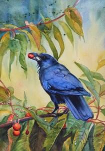 bluish tone crow with cherry in beak