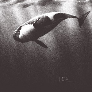 orca in underwater view