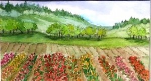 spring view of fields of tulips