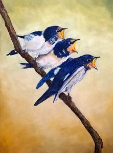 barn swallows with mouths open
