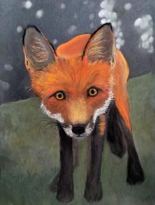 fox staring