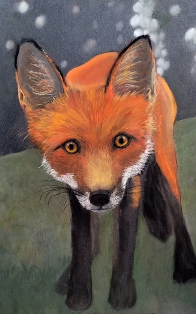 frontal view of a red fox