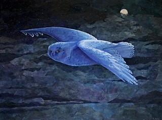 snow owl in blue light